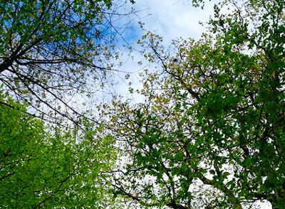 素材は天然の木で、温暖化防止と森林保全に貢献